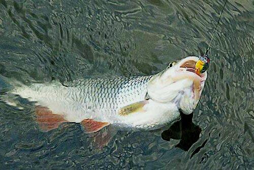 рыбалка в июле на голавля